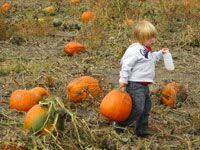 Odyssey Pumpkin Patch Groupon by Groupon Zombie Hayride And Flashlight Maze For Two Or Six At