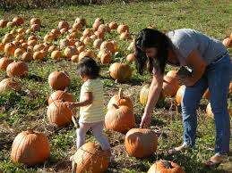 Pumpkin Picking In Ct by Fall For Rich Creamy Pumpkin Soup Connecticut Post