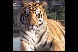Real Tony The Tiger Passes