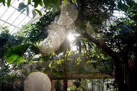 Matthaei Botanical Gardens Conservatory dunneiv