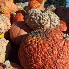 Best Pumpkin Patches Near Milwaukee swan pumpkin farm 15 photos u0026 12 reviews pumpkin patches