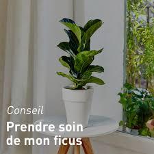 plantes vertes d interieur plantes vertes plantes et fleurs d intérieur et maison botanic