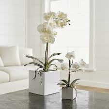Plants For Bathroom Counter by Potted Orchids For Master And Or Guest Bathroom Powchik