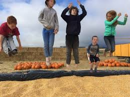 Best Pumpkin Patch Livermore by East Bay Pumpkin Patch Guide 510 Families