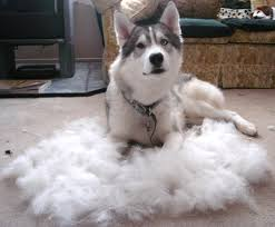 getting the fur out of furniture
