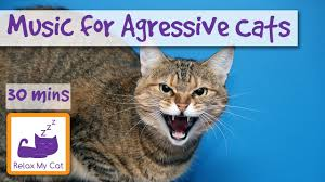 aggressive cat for aggressive cats to relax and calm cats with