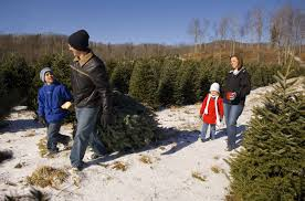 Silver Tip Christmas Tree Artificial by Tennessee Christmas Tree Growers U2013 Christmas Tree Farms In Tennessee