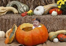 Pumpkin Farm Maryland Heights Mo by A Good Pumpkin May Be Hard To Find By Mid October Business