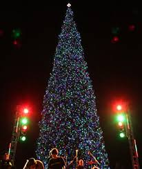 Christmas Tree Amazon Local by America U0027s Tallest Christmas Trees Travel Leisure