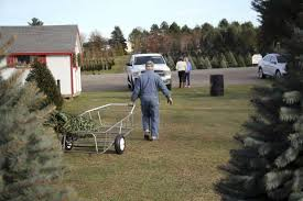 Kinds Of Christmas Trees by No Christmas Tree Shortage Here Huron Daily Tribune