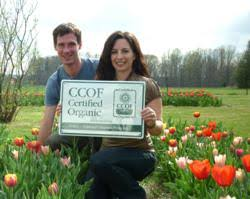 ecotulips becomes u s only certified organic flower bulb company
