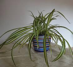 schlafzimmer gestalten teil 5 tipps zu pflanzen