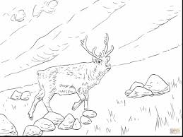 Awesome Reindeer Printable Coloring Pages With Page And Antlers