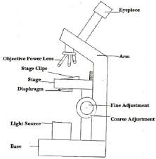 Difference Between Light Microscope and Electron Microscope with