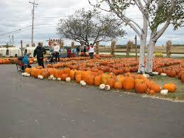 Pumpkin Farms Wisconsin by Swan U0027s Pumpkin Farm Franksville Wi