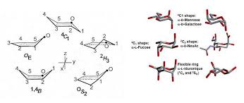 Chair Conformations In Equilibrium by Glycopedia