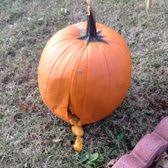 Pumpkin Picking Nj Near Staten Island by Cheesequake Farms 18 Photos U0026 16 Reviews Fruits U0026 Veggies