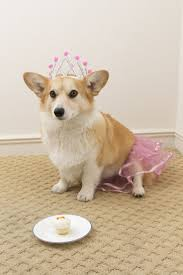 1000 images about Corgi s on Pinterest