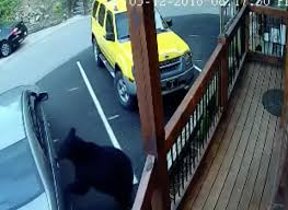 Lock Your Car Doors: Gatlinburg Bear Demolishes Inside Of Pickup Truck New 2017 Jeep Wrangler Unlimited Smoky Mountain In Edmton Ab S Tree Falls On Truck At Great Tional Park Man Killed Mountains National Park Pocket Guide Falcon 1 Dead After Multivehicle Crash Near The 2018 To Pigeon Forge Car Shows Wrangler Hood Decal Stickers Pair Sh1146 Ebay More Than 500 People Report Garotestinal Illness Visiting Trucking Llc Home Facebook Invasion Tennessee Search Continues Smokies For Missing Hiker News Thedailytimescom F100 Run Hot Rod Network Sixwheel1929packdstaeightsmokymtntourcar