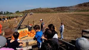 Tanaka Pumpkin Patch Irvine by 2017 Tanaka Farms Pumpkin Launch Youtube