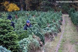 Christmas Tree Seedlings by December Farming In Focus Christmas Trees It U0027s Momsense