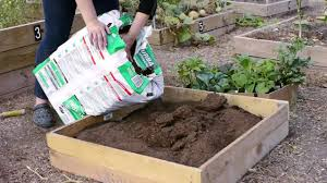 How Do I Start A Small Vegetable Garden In Texas? - YouTube 38 Homes That Turned Their Front Lawns Into Beautiful Perfect Drummondvilles Yard Vegetable Garden Youtube Involve Wooden Frames Gardening In A Small Backyard Bufco Organic Vegetable Gardening Services Toronto Who We Are S Front Yard Garden Trends 17 Best Images About Backyard Landscape Design Ideas On Pinterest Exprimartdesigncom How To Plant As Decision Of Great Moment Resolve40com 25 Gardens Ideas On