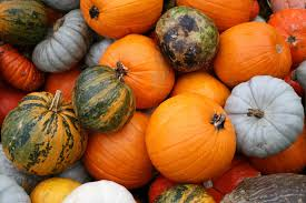 Pumpkin Patch Nj Monmouth County by Family Friendly Fall Activities In Nj Pumpkins Haunted Houses