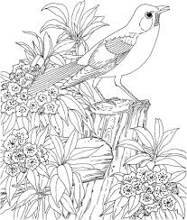 Coloring Pages Birds Adult Page For Adults Printable Free Book
