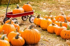 Underwood Farms Pumpkin Patch Hours by Where To Get Pumpkins In Los Angeles Cbs Los Angeles