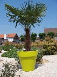 location palmier de chine green inside