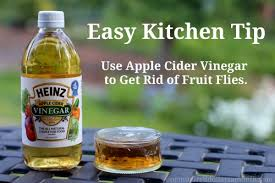 Little Flies In Bathroom Drain by Easy Kitchen Tips How To Get Rid Of Fruit Flies One Hundred