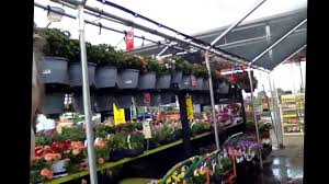 Here's Where I Work! Home Depot Garden Center! - YouTube Projects Design Garden Benches Home Depot Stunning Decoration 1000 Pocket Hose Top Brass 34 In X 50 Ft Expanding Hose8703 Lifetime 15 8 Outdoor Shed6446 The Covington Georgia Newton County College Restaurant Menu Attorney Border Fence Fencing Gates At Fence Gate Popular Lock Flagstone Pavers A Petfriendly Kitchen With Gardenista Living Today Cedar Raised Bed Shed
