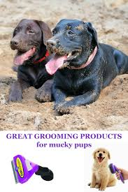 Blue Heeler Lab Mix Shedding by Dog Grooming Supplies For Labradors The Labrador Site