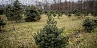 Christmas Tree Shop Warwick Rhode Island by Tree Farms Keep The Christmas Tradition Alive