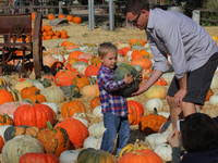 Stanly Lane Napa Pumpkin Patch by Napa Sonoma Pumpkin Patches Corn Mazes Now Open Fall For A Good