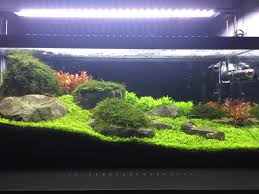 FTS Of My 20 Long Fusion Aquascape : PlantedTank Planted Tank Contest Aquarium Design Aquascape Awards How To Create Your First Aquascaping Love Pin By Marius Steenblock On Pinterest The Month September 2008 Pinheiro Manso Creating Nature Part 1 Inspiration A Beginners Guide To Aquaec Tropical Fish Style The Complete Brief Progressive Art Of 2013 Xl Pt2 Youtube Aquadesign Dutch Sytle Aquascape Best Images On Appartment Iwagumi Der Der Firma Dennerle Ist Da Aqua Nano
