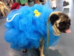Halloween Mart Las Vegas by Best 25 Loofah Costume Ideas On Pinterest Costumes De Fête Abc