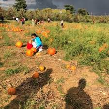 Pumpkin Picking Nj 2015 by Battleview Orchards 189 Photos U0026 115 Reviews Pick Your Own
