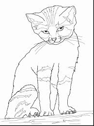Astonishing Cat Coloring Pages Printable With In The Hat Page And
