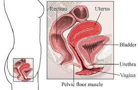 pelvic floor spasms fromgentogen us