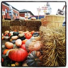 Best Pumpkin Patches Indianapolis by Trader Joe U0027s 41 Photos U0026 85 Reviews Grocery 2902 W 86th St