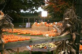 Kent Farms Pumpkin Patch by Best Places In The Uk To Pick Your Own Pumpkin This Halloween