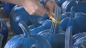 Pumpkin Farm Clarence Ny by Wny Shows Support For Officer U0027s Family Bpd Wgrz Com