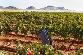 Kent City Pumpkin Patch by Four Ways To Experience Fall In Baja Arizona U2014 Edible Baja Arizona