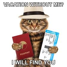 Vacation Without Me I Will Find You