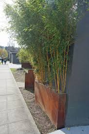 planting bamboo in a pot image result for narrow bamboo planter courtyard