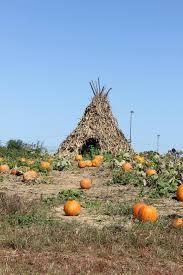 Pumpkin Farms In Southern Maryland by Y Worry Farm Pumpkin Patch U0026 Christmas Tree Shoppe Home Facebook