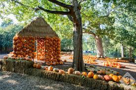 Atlanta Pumpkin Patch Corn Maze by Pumpkin Patches Corn Mazes U0026 Hay Rides Nashville Guru