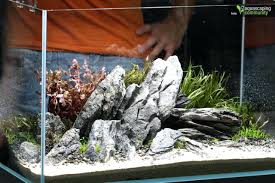 Aquascape Setup Images About Aquariums On Aquarium Setup Java ... King5com Fding Zen Through Aquascapes The Worlds Newest Photos By Pacific Aquascape Flickr Hive Mind Pacific Aquascape 28 Images Westin Photo Courtesy Of Christian Another Beautiful Pool Aquascapes For Luxury Living In Swimming Pool Contractors In Oahu Hi Aquascapes Ada Aquascaping Contest Homedesignpicturewin Submerged Jungle Fekete Tamas Awards Jungle 241 Best Aquatic Garden On Pinterest Aquascaping 111 Amazing Aquariums And The666 Extreme18