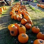 Pumpkin Farms Wisconsin by Jim U0027s Pumpkin Farm 15 Photos Pumpkin Patches N124w17781